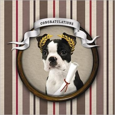 French Bull Congratulations
